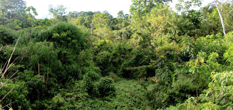 Nuestros bosques amazónicos están en peligro