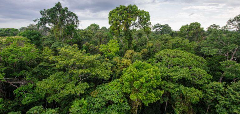 Protejamos los bosques para proteger nuestras vidas