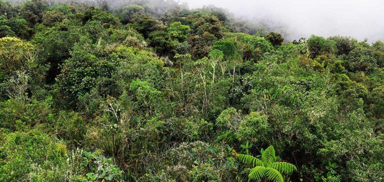 Día del Medio Ambiente: la Madre Tierra necesita ayuda