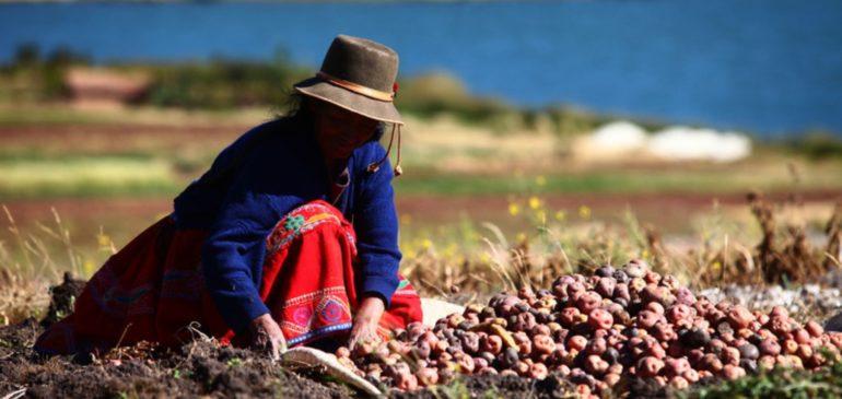ONAMIAP rechaza privilegios tributarios para agroexportadoras